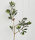 Artificial Olive Tree Branch