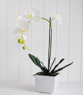 White silk Orchid in ceramoc vase
